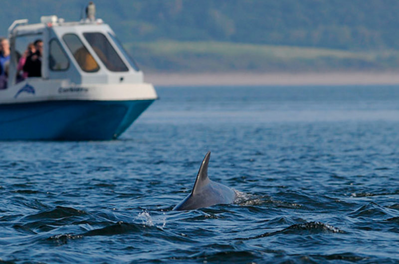 Dolphin watching at Chanonry Point Moray Firth ©Ben James/SNH