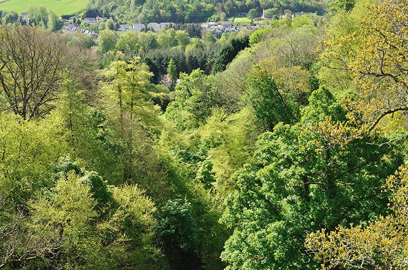 Scottish Woodland ©Lorne Gill/SNH