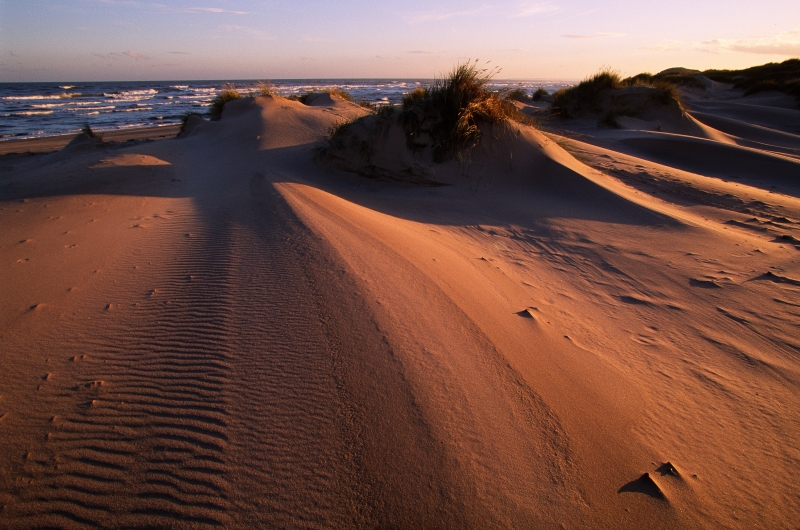 Picture of the sand dunes at Forvie NNR at sunset.