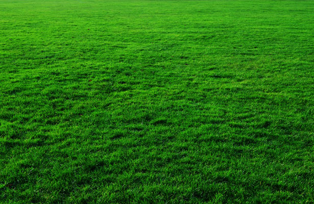 picture of close mown grass