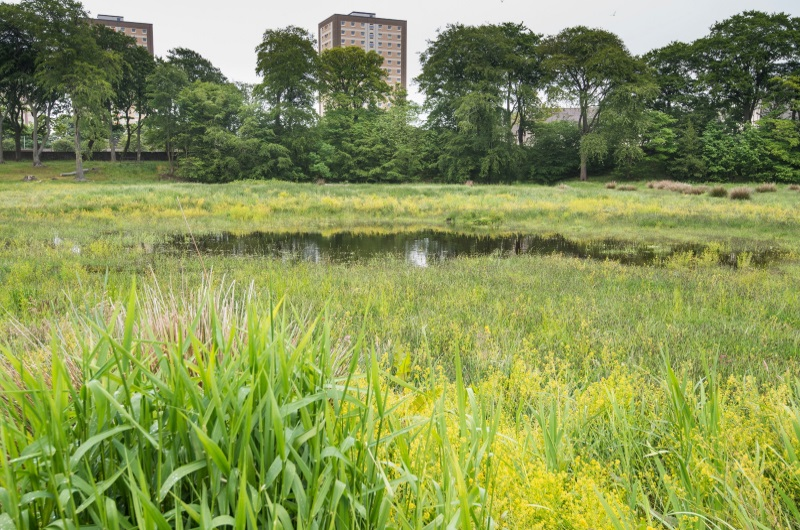 Picture of the Seaton wetland area which was planted with wildflowers.