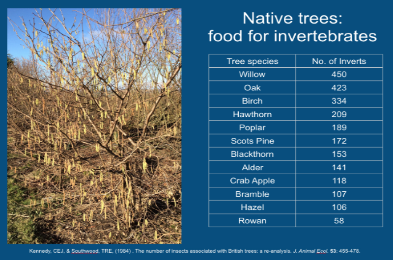 Native Trees as Food for Invertebrates