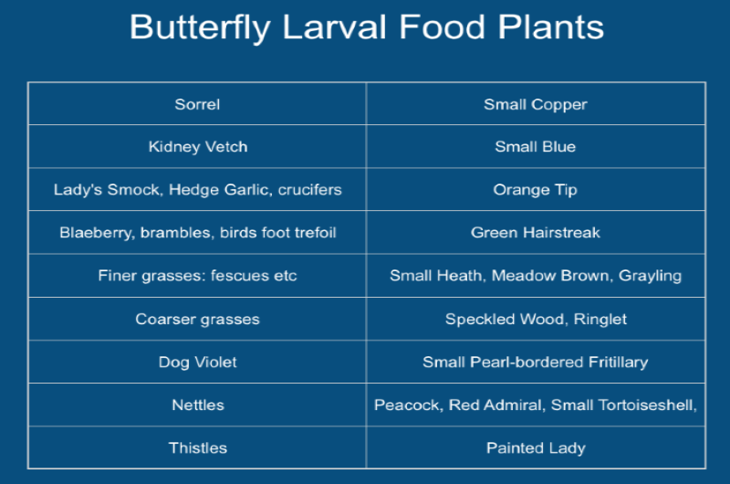 Some Butterfly Larval Food Plant Recommendations