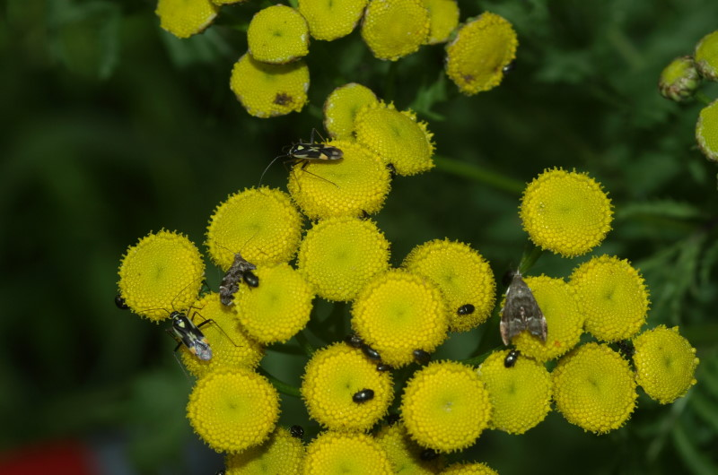 Photo of three species of pollinating insects on yellow flower